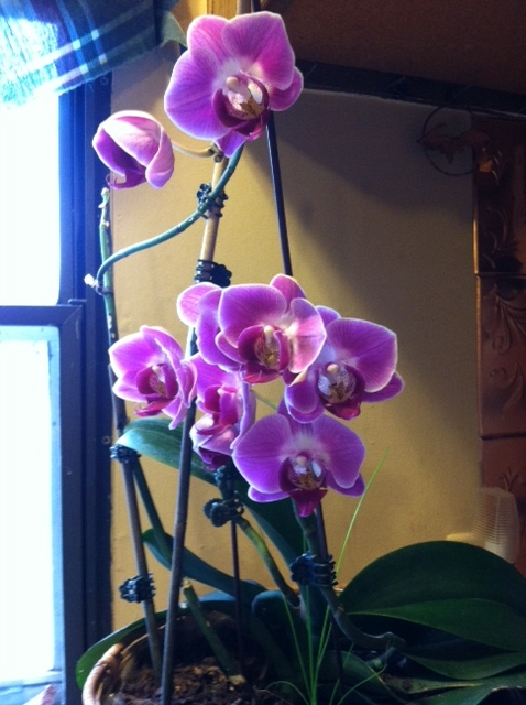 Orchids....a new start